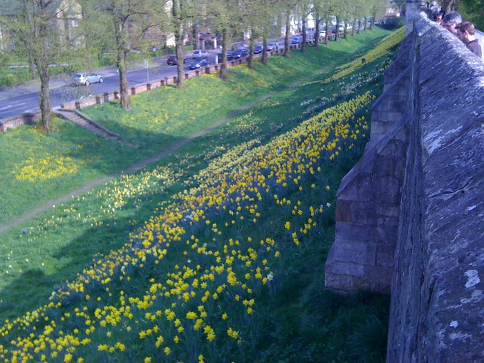 Foto de  The York Wall (York, UK)